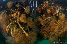 Organismi marini nel golfo di La Spezia