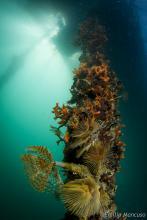 Organismi calficanti Golfo La Spezia
