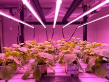 Particolari della Vertical farm presso il Centro ENEA Casaccia