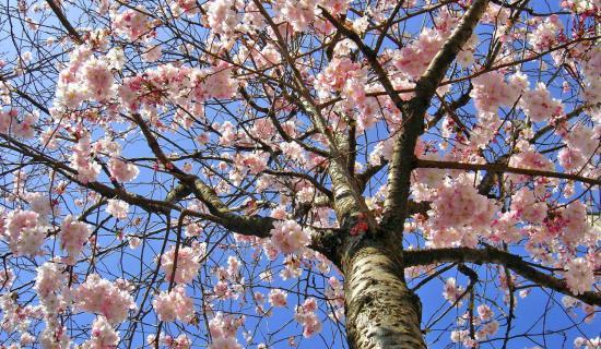 printemps_0.jpg